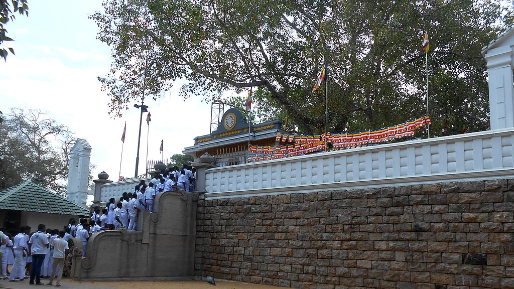 Les fidèles viennent prier Bouddha au pied du Sri Maha Boddhi