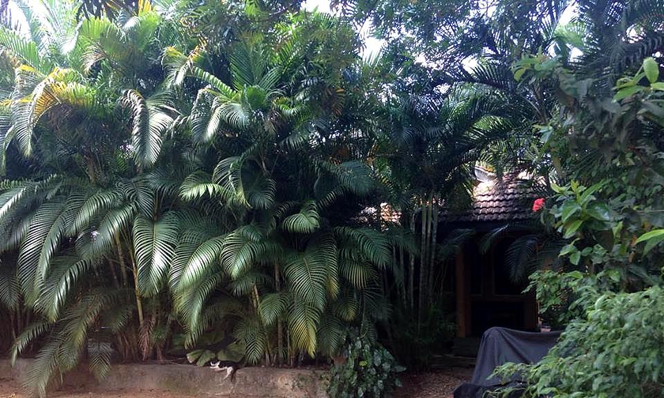 Guesthouse cachée derrière la verdure à Dambulla