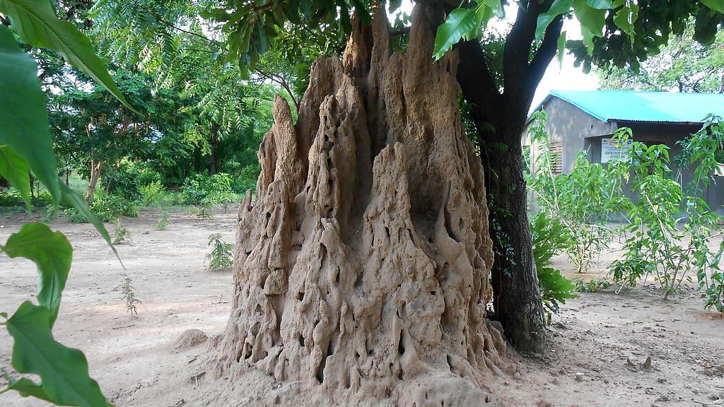 Termitière géante