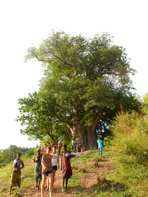 La maison Baobab