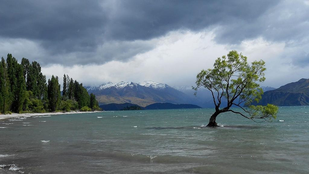 l'arbre solitaire de wanaka