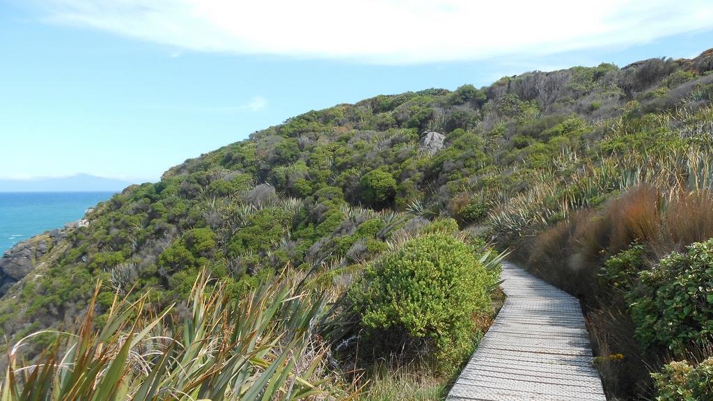Bluff hill track